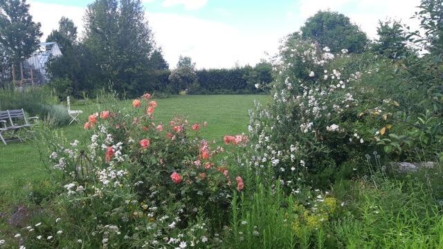 Rosen in der Gärtnerei